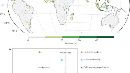 Plausible rice yield losses under future climate warming